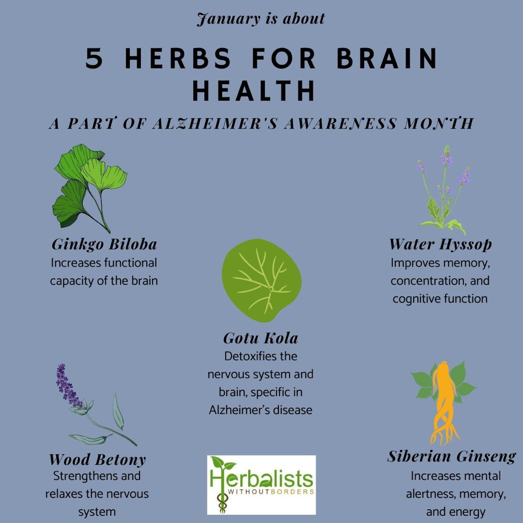 An image showing 5 herbs for brain health, a part of Alzheimer's Awareness Month. The herbs include Gingko biloba, Gotu kola, Water hyssop, Wood betony, and Siberian ginseng, with a small graphic of each and the HWB logo.